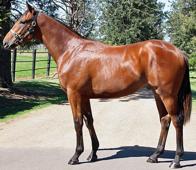 Another 2 Dynamic Syndications Horses Receive Their Racing