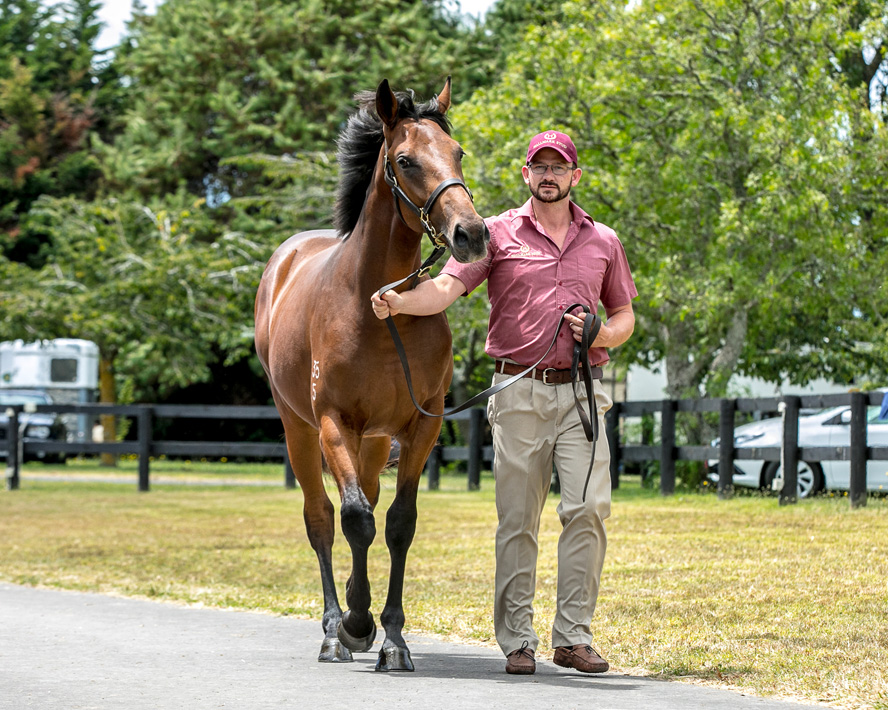 FASTNET ROCK x TEMPLE OF PEACE 1/2 Brother to WHOBEGOTYOU with GAI
