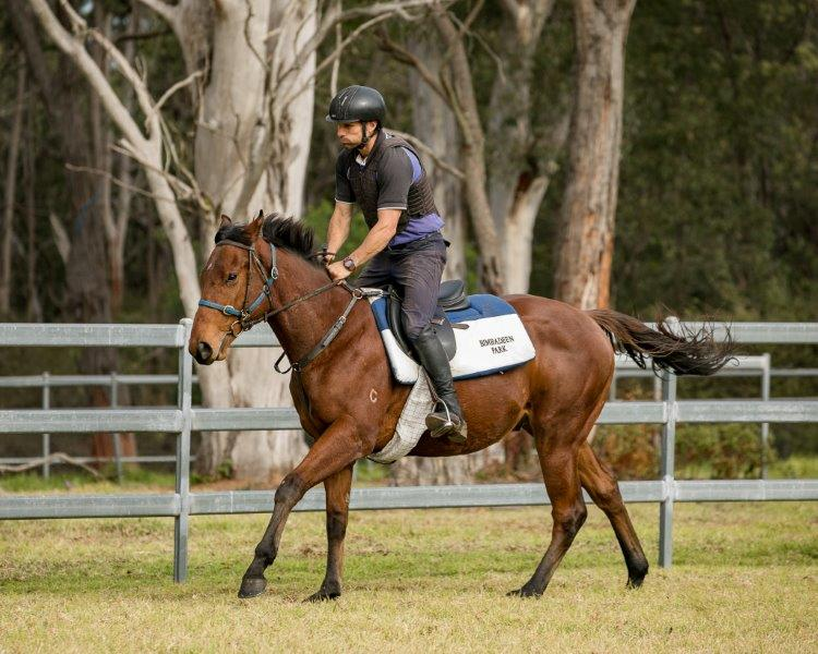 FASTNET ROCK x FRECKLE FACE Yearling Colt with GAI WATERHOUSE RACING