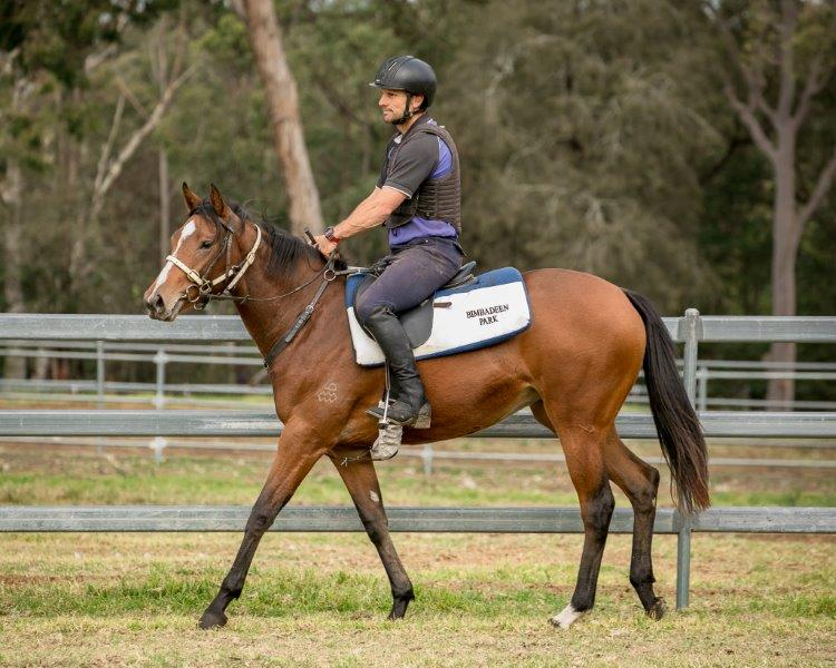 SNITZEL x FICTIONAL ACCOUNT (IRE) Filly with CIARON MAHER