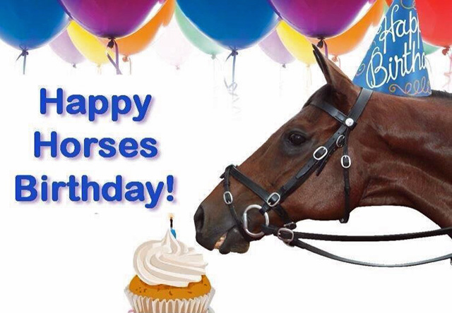 Happy Birthday Wishes To All Our Horses
