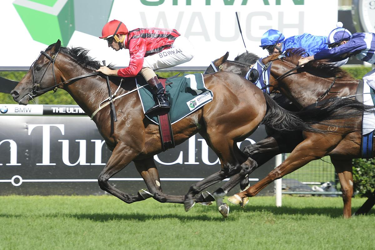 Sebring X Vicereine Now 2yo Filly To Own Race With James Cummings Ceres Classic 225 Gr Hallowed Crown Beating Home Shooting Win And Sweynesse In The Group 1 Randwick Guineas On 7 3 2015